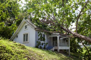 how to deal with a fallen tree in the treasure valley